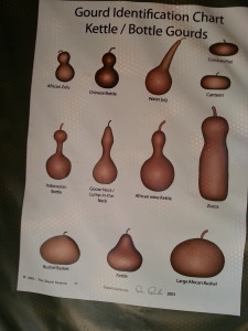bottle gourd identification chart