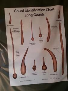 long gourd identification chart