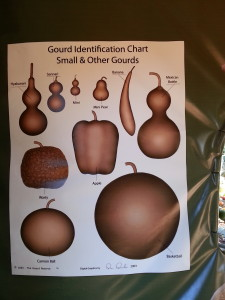 gourd and squash identification chart